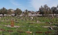 Cementerio_General_-_Patio_29_-_Panorámica